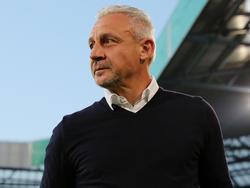 """Hansa-Coach Pavel Dotchev ärgert sich über """"schwarze Schafe, die alles kaputt machen"""""""